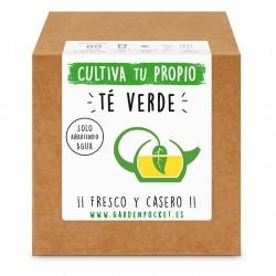 Siente la experiencia de cultivar con nuestro Kit de semillas de té verde. ¡¡ Fresco y relajante !!  Variedad: CAMELLIA SINEN