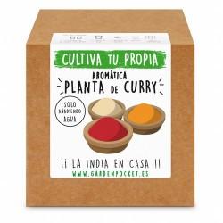 Siente la experiencia de cultivar con nuestro Kit de semillas de planta aromática a curry. ¡¡ Perfume de países exóticos !!