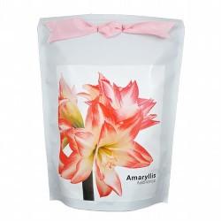 Amaryllis Ambiance- Una planta con unas flores con tonos rosados espectaculares en forma de trompeta con hermosas hojas de colo