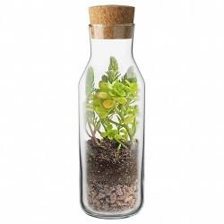 Este kit corresponde a una nueva interpretación del clásico terrario, combinando diseño y ecología.Este jardín interior contien