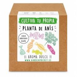 Siente la experiencia de cultivar con nuestro Kit de semillas de planta anis. ¡¡ Aroma a caramelo !!  Variedad: PIMPINELLA AN