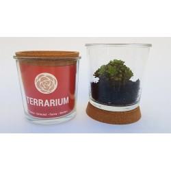 Las plantas suculentas son fáciles de cuidar y producirán brotes que continuarán llenando su terrario o simplemente puede corta
