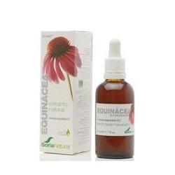 Extracto natural de raíz de *Echinacea angustifolia D.C. en glicerina vegetal. Flavonoides.................0,2 mg / ml; 0,6 mg